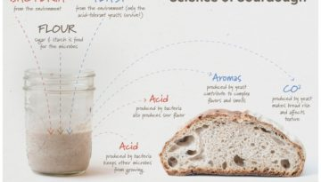 science-of-sourdough-students-discover-1200x817
