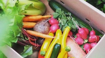2 Svet bedniciek- ovocie-a-zelenina-od-farmarov