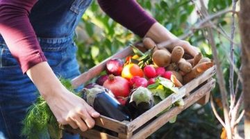 5 Svet bedniciek- ovocie-a-zelenina-od-farmarov